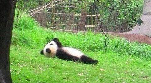 Fiamthu Tawi 3 Panda